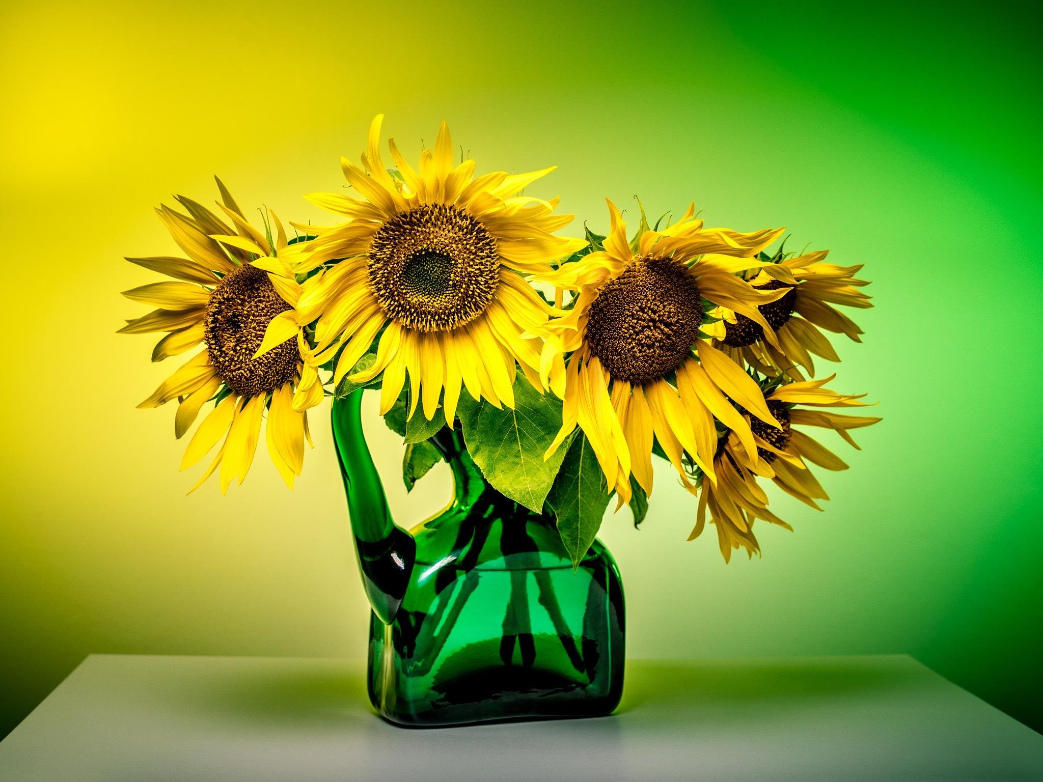 Sonnenblumen in grüner Vase Still Life ala van Gogh mit gelbem und grünem Hintergrund